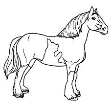 Kleurplaat Van Een Paardenhoofd Springendes Pferd Vektor Abbildung