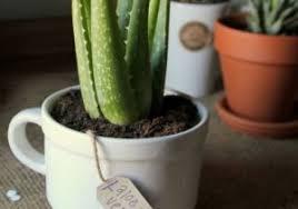 office cubicle plants. office desk plant along plants philippines cubicle