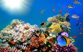 Free download Reef ocean sea underwater ...