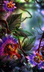 3D Flower Wallpapers - Wallpaper Cave