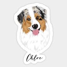 Australian Shepherd Size Chart Chloe