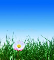 green grass blue sky flowers. Download Green Grass, Flower And Blue Sky Stock Image - Of Blue, Meadow Grass Flowers R