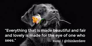 Distraction Quotes Beauteous Seeking Distraction Rumi Quotes