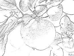 Appelboom Kleurplaten Kidre