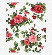 drawing beautiful rose flowers hd png