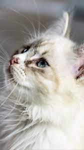 Cute Kitten Wallpaper Hd - Kitten