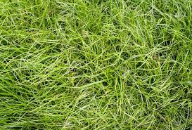Tall grass texture seamless Wild Grass Green Long Grass Texture Pattren On Ground Stock Photo 14846875 123rfcom Green Long Grass Texture Pattren On Ground Stock Photo Picture And
