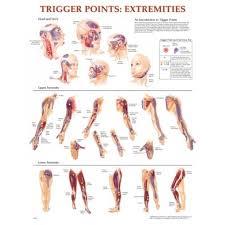 Shoulder Trigger Points Chart Trigger Point Chart Set Torso Extremities 2e
