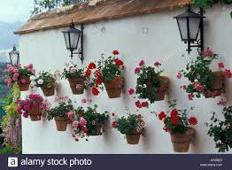 spain andalucia ronda flower pots of geraniums line white wall of ared fancy wall flower