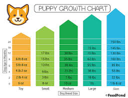 Pekingese Growth Chart Puppy Growth Chart The Simplest Way To Figure Out Your