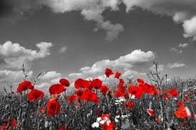 Image result for office closed for remembrance day