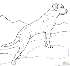Small Picture Labrador retriever coloring page Free Printable Coloring Pages