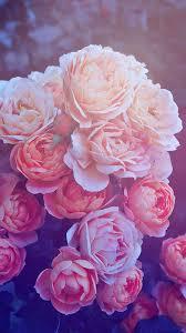 Rose Phone Wallpapers - Top Free Rose ...