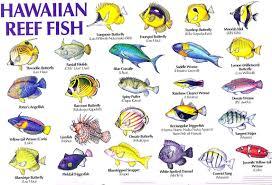 Oahu Fish Chart Hawaii Reef Fish Guide With Hawaiian Names 1 Aloha Joe