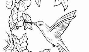 Small Picture Hummingbird Coloring Pages Hummingbird Coloring Pages Team Colors