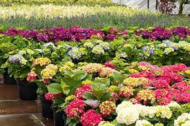 harmony gardens a siteone company