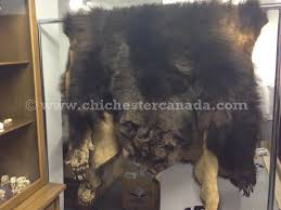 left grizzly bear hide right mounted grizzly bear rug