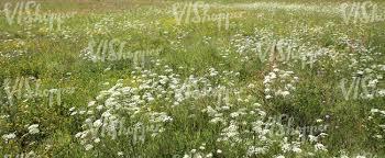 tall grass texture. Summery Tall Grass Meadow Texture