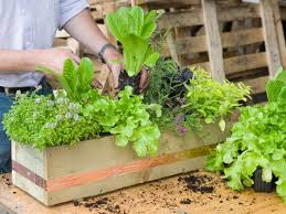Kitchen Gardening Tips 11 Easy Gardening Tips For Beginners Hgtvs Decorating Design