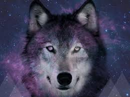 galaxy tumblr hipster wolf. Modren Hipster Hipster Ish Space Wolf 2 By XXVenomazoidXx 1024x768 On Galaxy Tumblr G