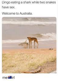 Australial dingo fuck girl