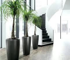 modern office plants. Big House Plants Easy Smooth Flowerpot Beautiful Houseplants Large Modern Low Light Office