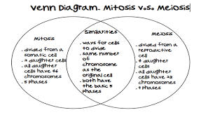 Mitosis And Meiosis Comparison Chart Printables Comparing Mitosis And Meiosis Bebodevelopers