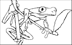 Small Picture Coloring Book Red Eyed Tree Frog