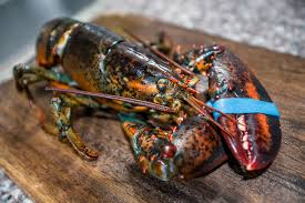 live lobsters shipped