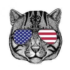 Fotka Kočka Divoká Kočka Rybářská Rukou Nakreslené Ilustrace Pro