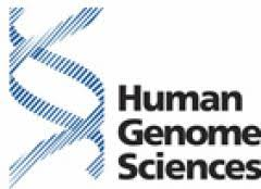 Human Genome Sciences Stock Price Forecast News Nasdaq Hgsi