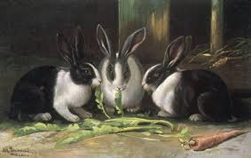 dutch rabbits 1905 4349247 framed