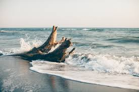 beach cottage furniture coastal. Beach Furniture Cottage Home | Coastal U0026 House Driftwood IWYAABH M