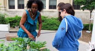 """Growing A Healthy Food System for Englewood: """"We Could Be Doing This  Together"""" - The Chicago Community Trust"""