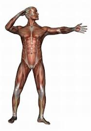 anatomy man image