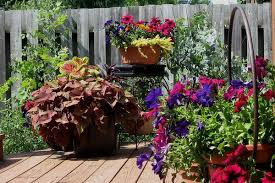 Best 25 Container Plants Ideas On Pinterest  Container Flowers Container Garden Plans Flowers