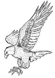 Small Picture Coloring Pages Draw A Falcon Download Printable Coloring Pages