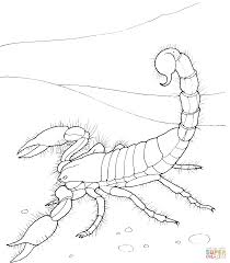 Small Picture Desert Animals Printables Coloring Coloring Pages