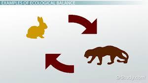 what is ecological balance definition importance video what is ecological balance definition importance video lesson transcript com