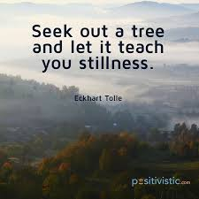 Quote On Stillness Eckhart Tolle Seek Tree Teaching Lessons Enchanting Stillness Quotes