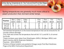 Growing Peaches In Climate Zone 5