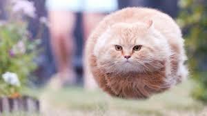 Depressed Cat Meme Generator images via Relatably.com