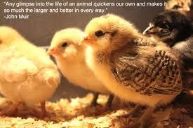 cute animals quotes. Wonderful Cute Cute Animal Quote Image In Animals Quotes