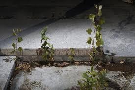 1 the met roof garden mos