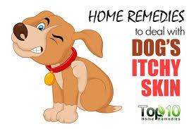 Home Remedies to Deal with Your Dog's Itchy Skin | Top 10 Home Remedies