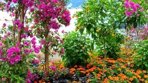 Small Picture Flower Garden Wallpaper Free Download Image Gallery HCPR