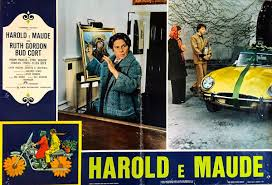 I Think I See The Light Harold And Maude The Greatest Film Youve Probably Never Heard Of The