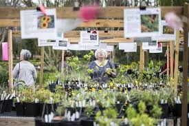 patrons browse the multitude of plant species available during the march mart plant march 14