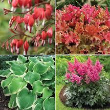 perennial assorted hummingbird garden for shade collection