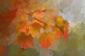 tree nature texture leaf fall flower foliage red color autumn season maple painting thanksgiving leaves modern